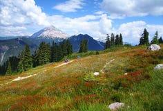 British Columbia i Kanada Royaltyfri Bild