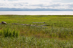 British Columbia Marsh. Marsh In The Vancouver Area Overlooking The Strait Of Georgia And Vancouver Island royalty free stock photos