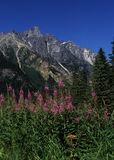 British Columbia Mountains. Summer flowers in the mountains of British Columbia, Canada Royalty Free Stock Photos