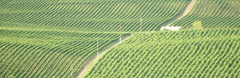 British Columbia Vineyard Okanagan. Rolling vineyards of Osoyoos, British Columbia stock photo
