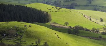 Panoramic View of British Countryside at Spring. British countryside hilly agricultural fields at spring. Shropshire in United Kingdom Stock Photography