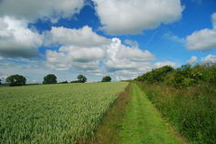 British countryside, walking path and rye field. National hiking trail by Newcastle upon Tyne. Rye fields stock photography