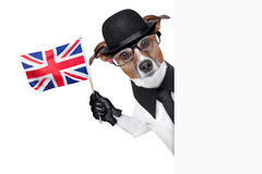 British dog  banner. British dog with black bowler hat and black suit waving a flag Royalty Free Stock Photo