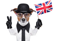 British dog  banner. British dog with black bowler hat and black suit waving flag Stock Photography