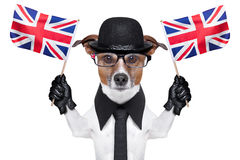 British dog. With black bowler hat and black suit waving flags Royalty Free Stock Photography