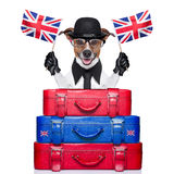 British dog Stock Photography