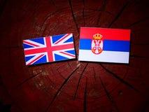 British flag with Serbian flag on a tree stump isolated. British flag with Serbian flag on a tree stump stock image