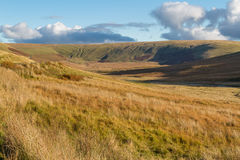 British grassy wilderness, evening. Stock Image