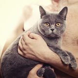 British gray cat in the hands of men Royalty Free Stock Images