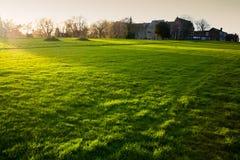 British gräs Arkivbild