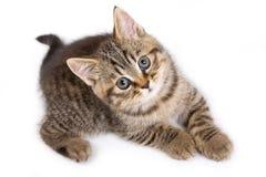 British kitten Stock Images