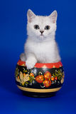 British kitten. White british kitten in decor Stock Photo