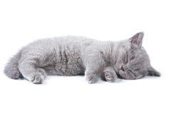 British kitten. On white background Stock Images