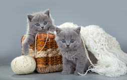 British kitten with a ball of wool in basket Royalty Free Stock Photo