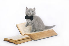British kitten with a book. British kitten with a book on a white background Royalty Free Stock Image