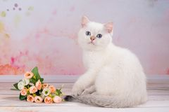 British kitten with flowers Royalty Free Stock Images