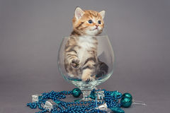 British kitten and Christmas toys Stock Photos