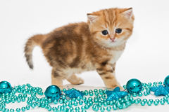 British kitten and Christmas toys Stock Images