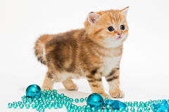British kitten and Christmas toys Stock Photo