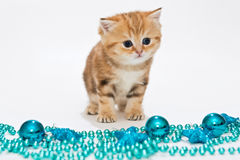British kitten and Christmas toys Royalty Free Stock Images