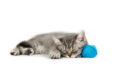 British kitten funny white, isolated, playing stock images