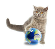 British kitten playing with earth Royalty Free Stock Photos