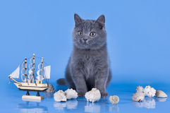 British kitten playing with a ship Stock Images