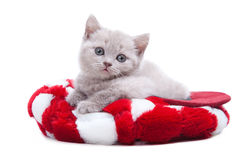 British kitten in red hat Royalty Free Stock Photo
