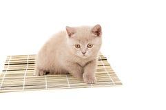 British kitten sitting on a napkin isolated Royalty Free Stock Photography