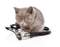 British kitten with a stethoscope.  on white background Royalty Free Stock Photography