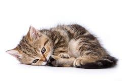 British kittens Stock Photo
