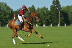 British Polo Day in Moscow Royalty Free Stock Images