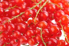 British Redcurrants Royalty Free Stock Image