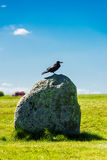 British Rook on a stone of Stonehenge. Bare, grayish white face, thinner beak and peaked head. The rook Corvus frugilegus is a member of the family Corvidae in Stock Image