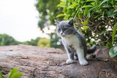 British short hair cat, on stone Stock Images