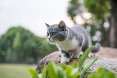 British short hair cat, on stone Stock Image