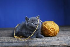 Kitten and ball of yarn. Floor, looking up royalty free stock images