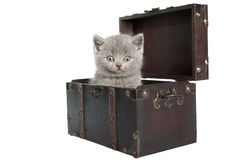 British short-hair kitten in a chest Royalty Free Stock Photography
