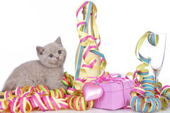 British short hair kitten between streamers Royalty Free Stock Photo