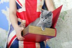 British Shorthair baby. Girl holding a British Shorthair kitten in a box, book-shape Stock Photos