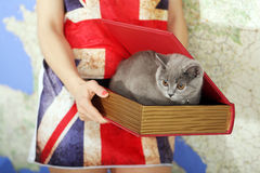 British Shorthair baby. British Shorthair kitten in a box, book-shape, Europe map background Royalty Free Stock Images