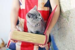 British Shorthair baby. British Shorthair kitten in a box, book-shape, Europe map background Stock Photography