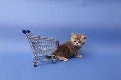 British Shorthair baby. Baby kitten near a shopping cart, one week old stock photo