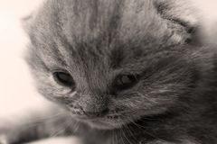 Baby cat with cute face, close-up portrait stock photography