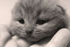 Baby cat with cute face, close-up portrait royalty free stock photography
