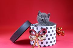 Kitten as Christmas gift in a present box, red background stock image