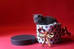 Kitten as Christmas gift in a present box, red background royalty free stock photo
