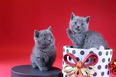 Kitten as Christmas gift in a present box, red background stock photography