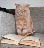 The British Shorthair and the book. Royalty Free Stock Photo