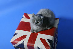 British Shorthair on a box Royalty Free Stock Photos